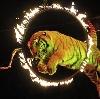 Цирки в Димитровграде