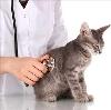 Ветеринарные клиники в Димитровграде